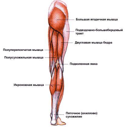 Когда болят мышцы и суставы что делать как лечить